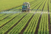 Chlorpyrifos – Outlawed in homes and gardens, the pesticide is still sprayed on food crops and is now blamed for the deaths of seven tourists in Chiang Mai, Thailand